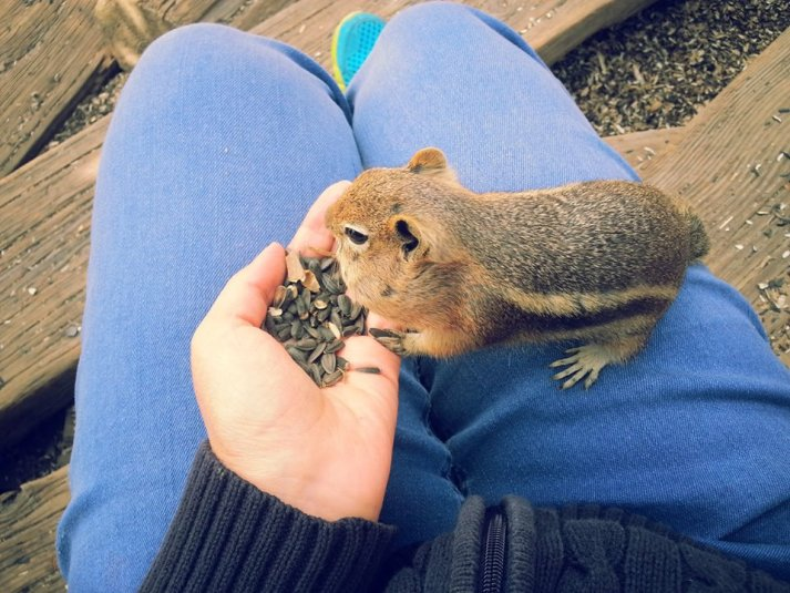 There's a corner of St. Elmo home to hundreds of friendly chipmunks. You can buy feed for 50c and these little critters will crawl all over you nibbling away at their seeds. They are incredibly adorable.