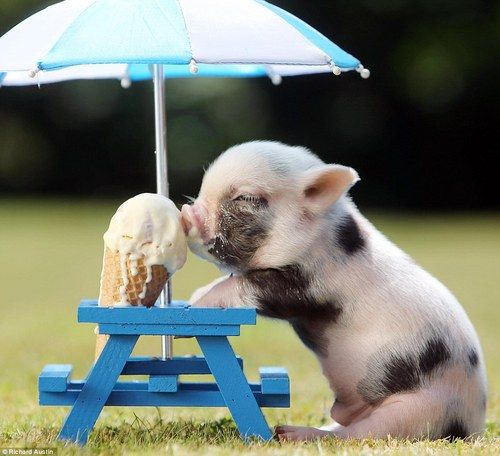 Baby Piggy. My personal favorite.