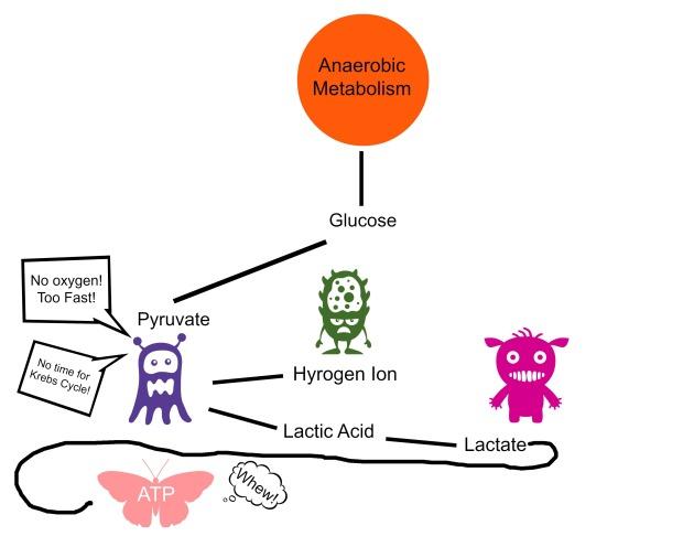 Anaerobic Metabolism